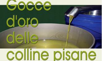 """III' MANIFESTAZIONE """"GOCCE D'ORO DELLE COLLINE PISANE"""" 9 – 10 MARZO 2013 – PROGRAMMA"""