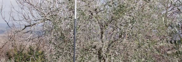 II Campionato interreginale Toscano Ligure di potatura professionale dell'olivo a vaso policonico