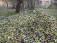 Corso gratuito sugli insetti dannosi all'oliveto e applicazioni su tecniche digitali – Casciana Alta frantoio dei fratelli Caprai 9 febbraio 2019